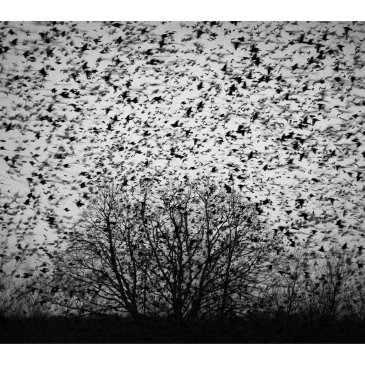 jo stephen starlings