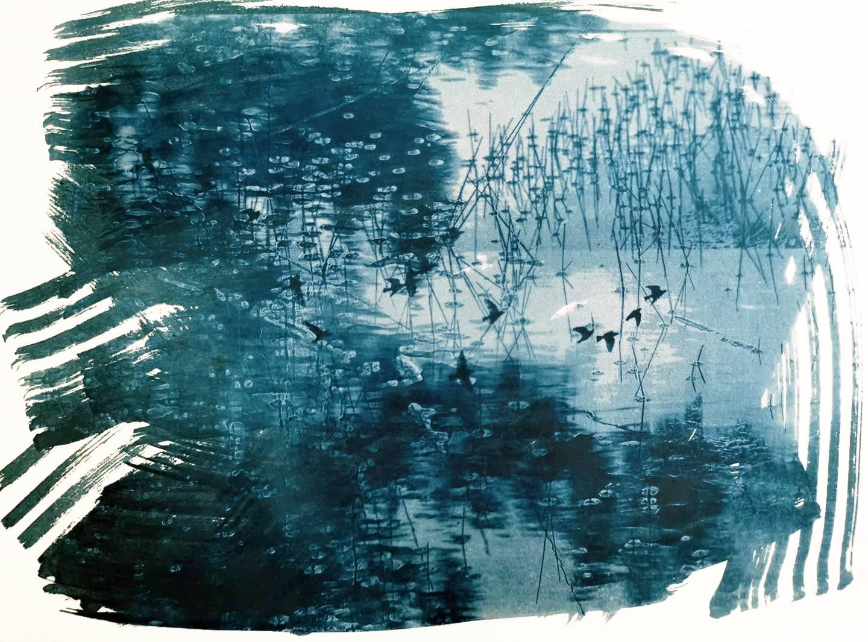 jo stephen cyanotype