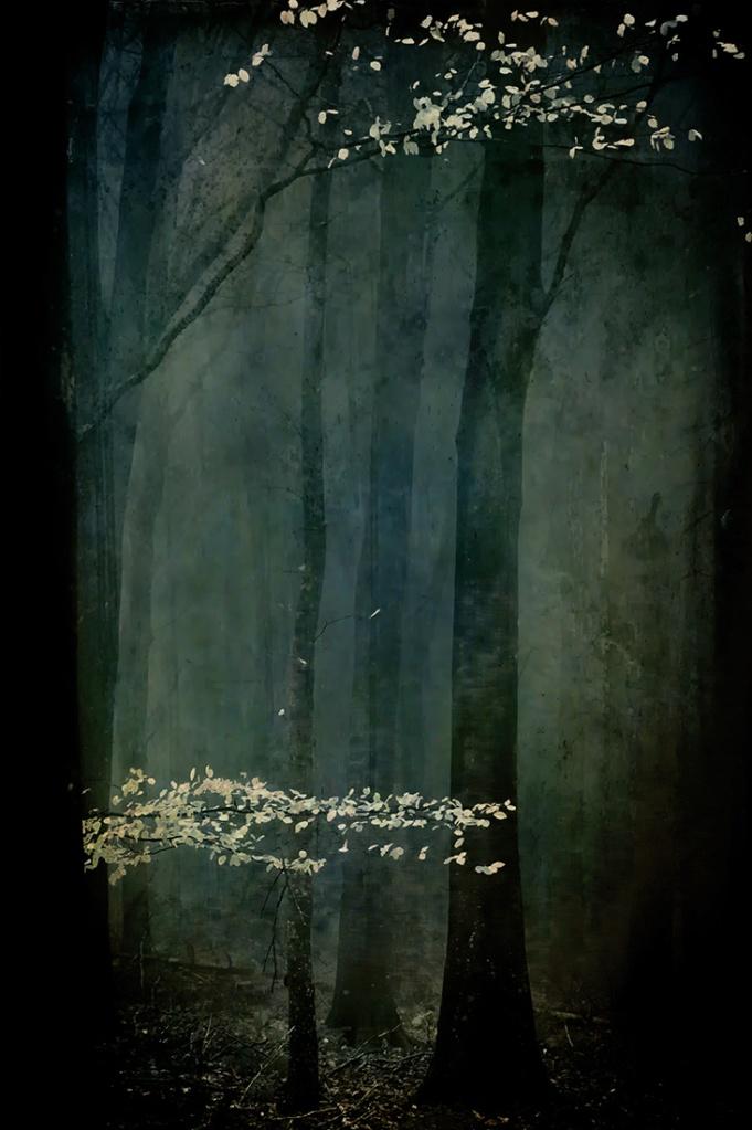 jo stephen photogrraphy trees