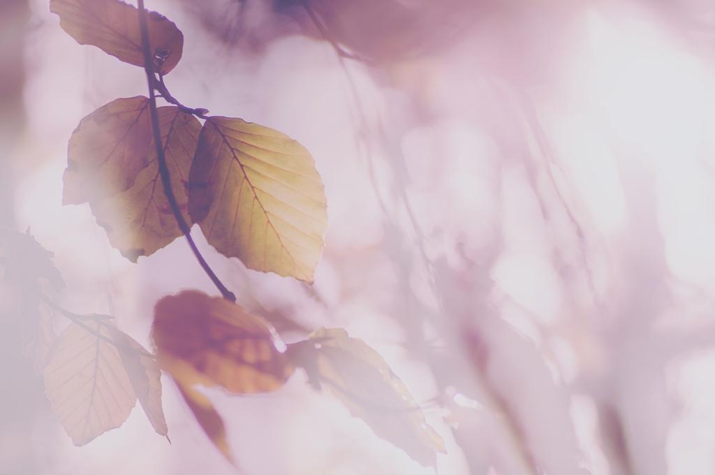 jo stephen autumn leaves