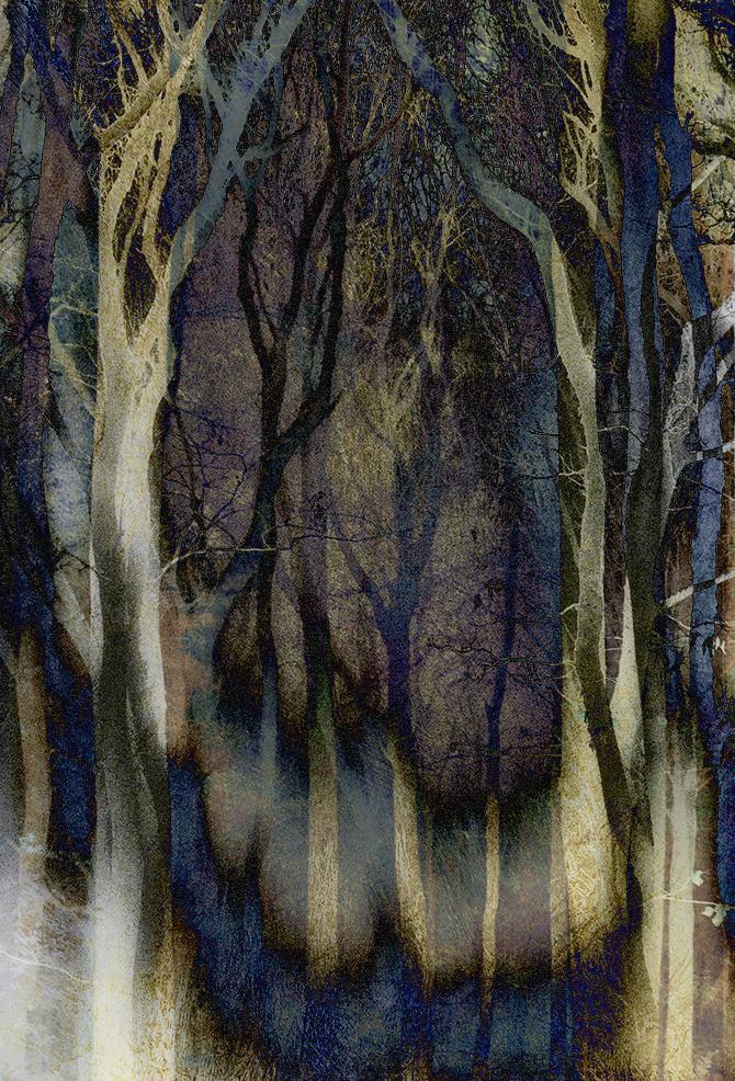 Jo Stephen tree woodland photography