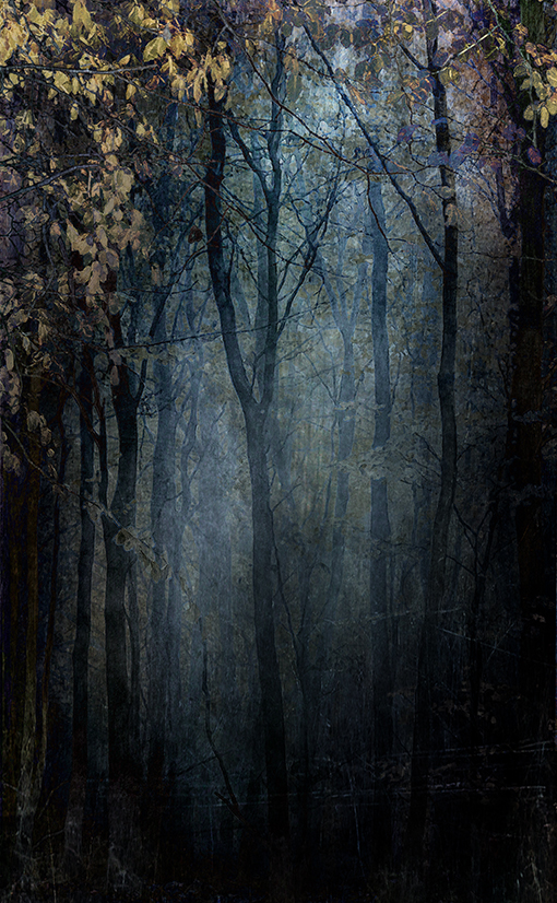 jo stephen woodland photography
