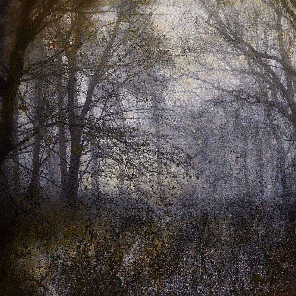 JO stephen woodland photography dryads