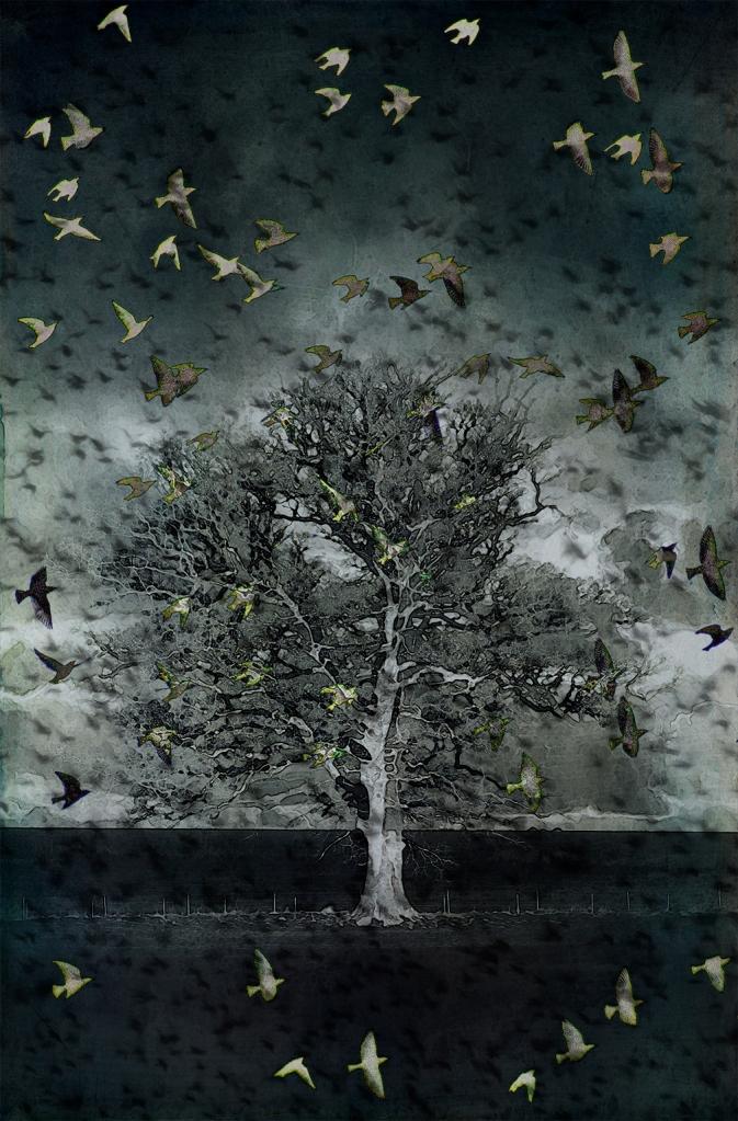 jo stephen photography starlings birds tree
