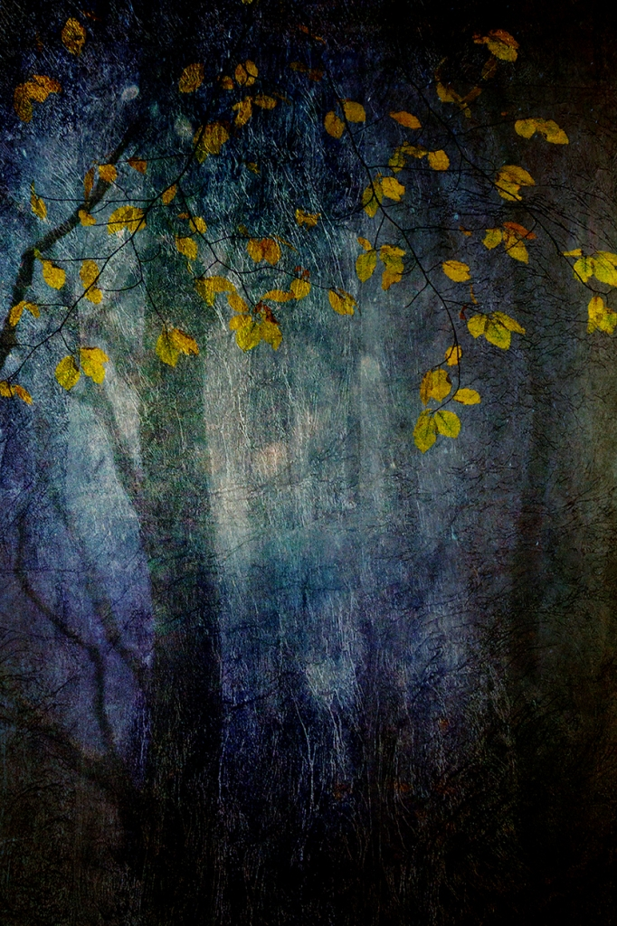 jo stephen photography trees