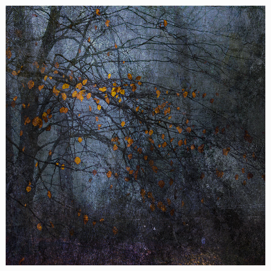 jo stephen photography trees woodland