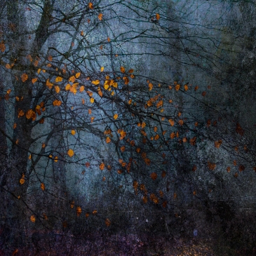 jo stephen tree photography