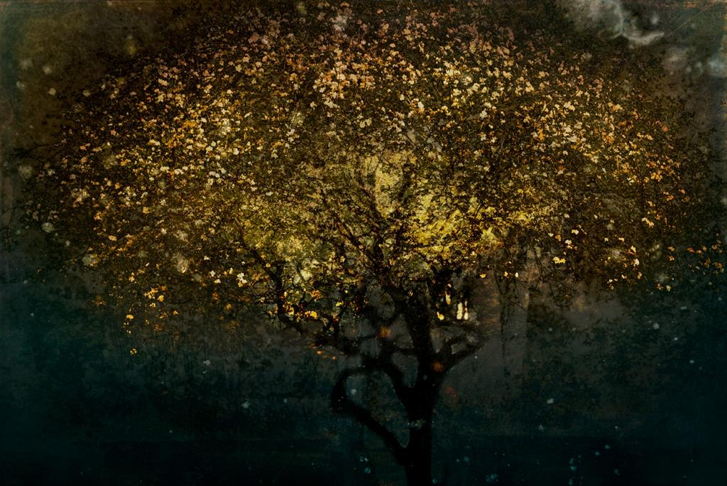 jo stephen tree photography gold
