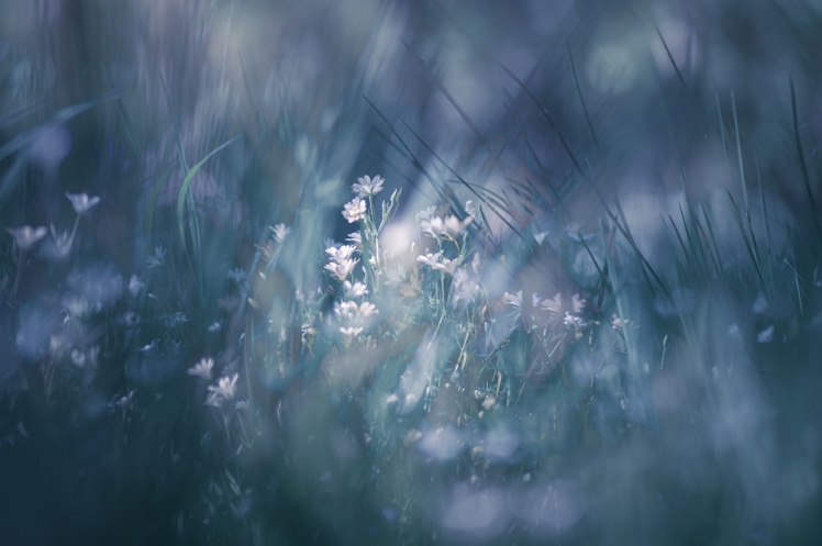 jo stephen ethereal nature photography