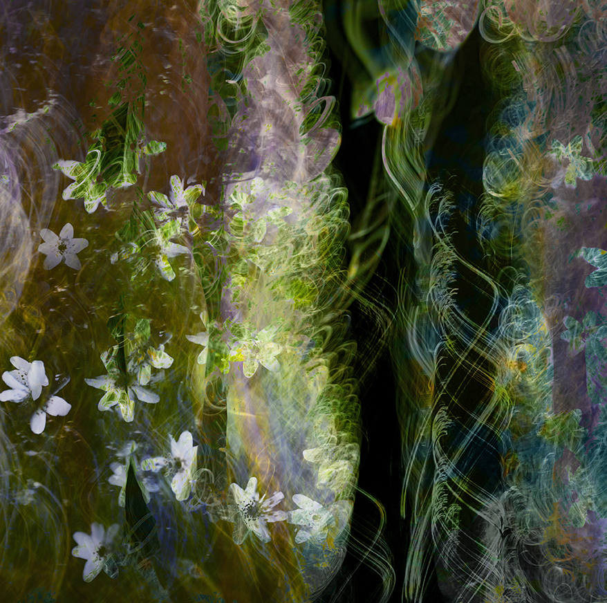 abstract impressionist dorset photography