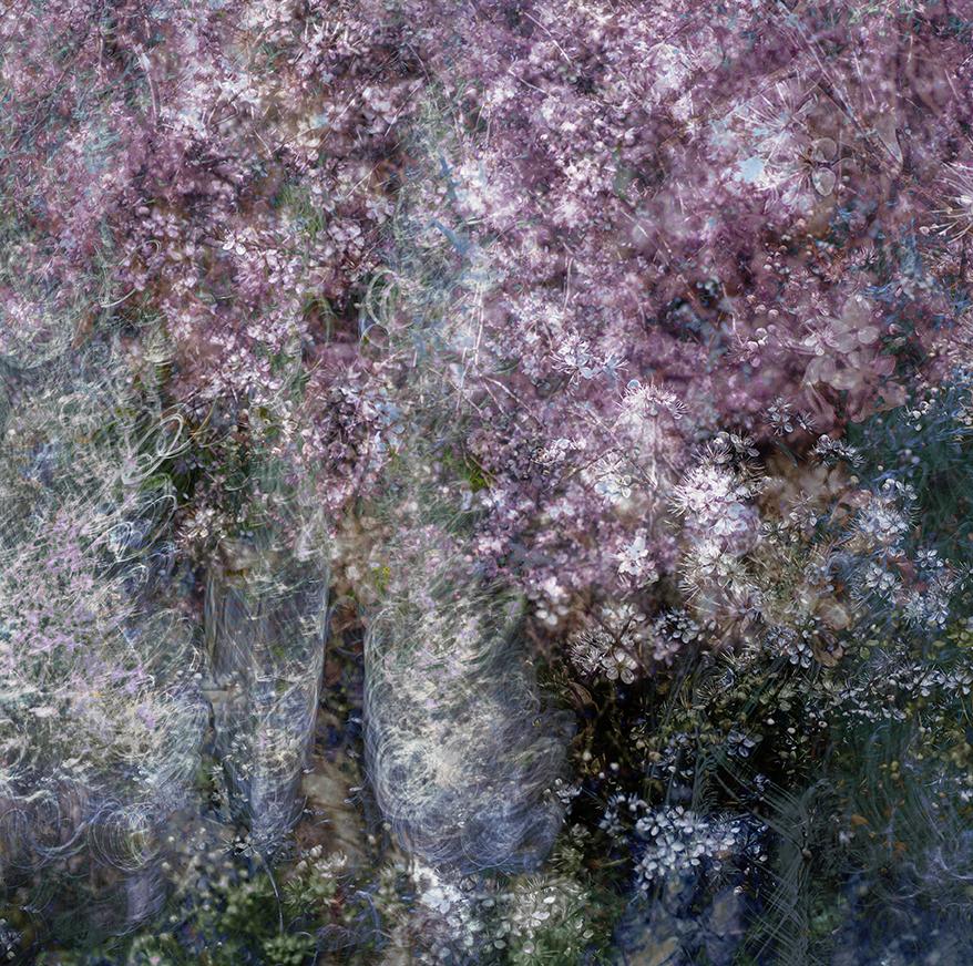 jo stephen cherry blossom