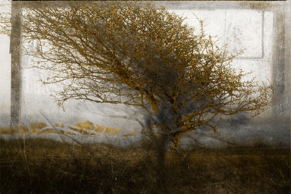 jo stephen photography hawthorn tree